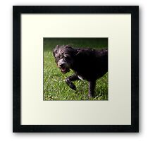 Dogs with game face on .5 Framed Print