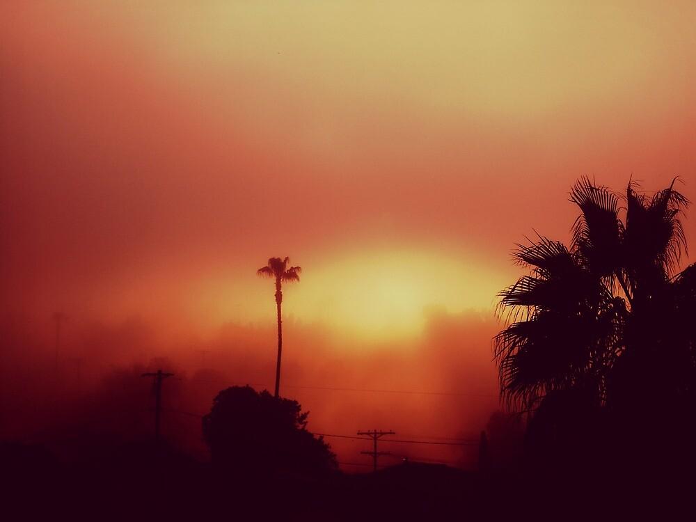 CALIFORNIA by Laura E  Shafer