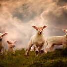 Lambs by ajgosling