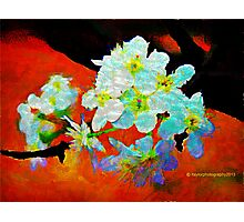 Abstract Spring Blossoms in Oil Photographic Print