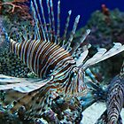 Lion Fish Den by Robert Zunikoff
