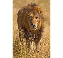 Prowling  Photographic Print