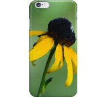 Black Eye Susan Flowers iPhone Case/Skin