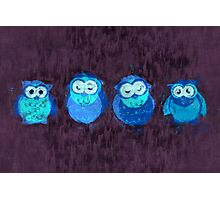 Owl Showers Photographic Print