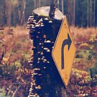 Right Turn in the Wrong Season - Cowichan Bay,British Columbia by ChristopherFord