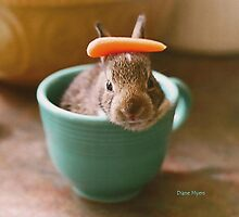 bunnycup by Diane Myers