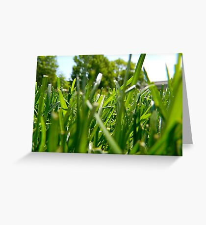 Green Grass and Insect Greeting Card