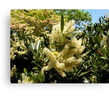 Pale Yellow Flowers Canvas Print