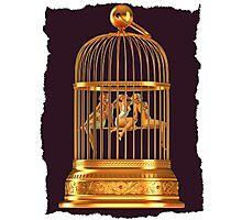 Bird Cage Photographic Print