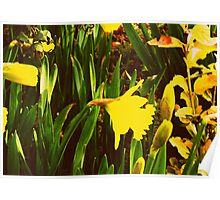 Signs of Spring Poster
