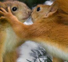 Baby Squirrel Kiss Sticker