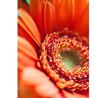 Stay close Petal Photographic Print