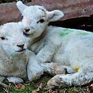 Love ewe by melek0197