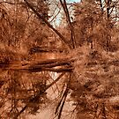 Creek Reflections by aprilann