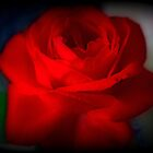 Autumn Red Rose by kkphoto1