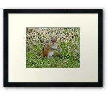 Irresistible Chipmunk Eyes Framed Print