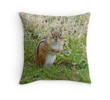 Irresistible Chipmunk Eyes Throw Pillow
