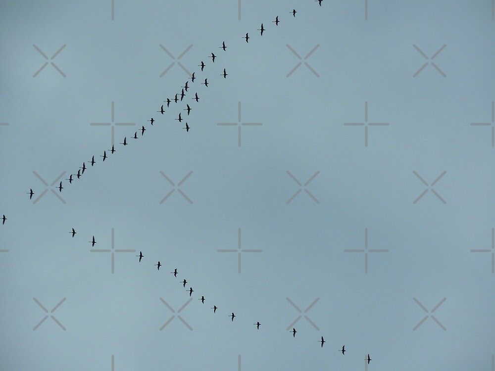 Flight of the Sandhill Crane by Betty  Town Duncan