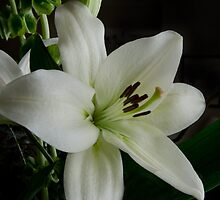 White Lily by Halobrianna