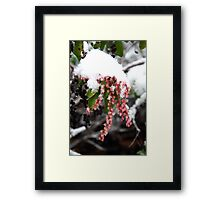 Signs of Spring - really? Framed Print