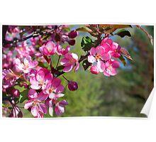 Spring Beauties Poster