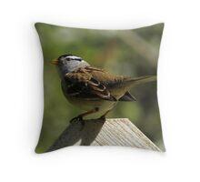 wary sparrow Throw Pillow