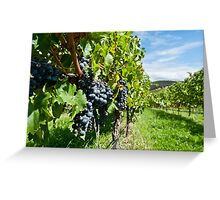 Grapes in the summer sun Greeting Card