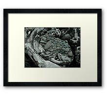 Natural Design Framed Print