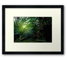 Light streaming through the palms Framed Print