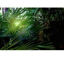 Light streaming through the palms Photographic Print