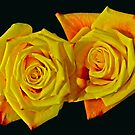 ROSE BUD BY 2 by Paul Quixote Alleyne