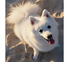Beach Buddy Photographic Print