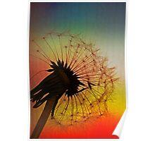 Dandelion Spectrum Poster