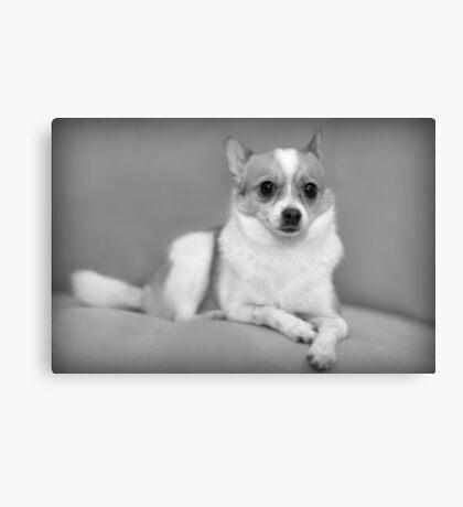Stella in Black and White~ Canvas Print