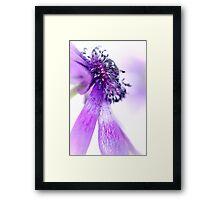 A Majestic Bend of the Purple Princess.. Framed Print