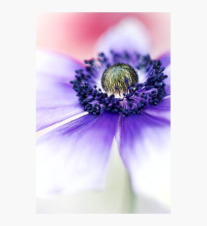 Flower Power flower.... Photographic Print