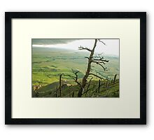 Stormy Tree Framed Print