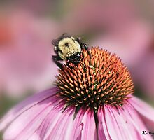 Bee on Cone Flower by KatMagic Photography