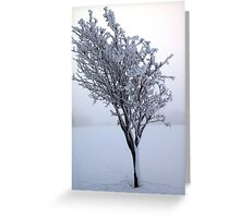 Frozen Tree, Northern Ireland Greeting Card