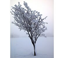 Frozen Tree, Northern Ireland Photographic Print