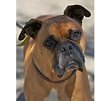 Bubba Da Boxer Photographic Print