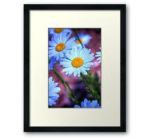 Daisy 4 Framed Print