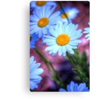 Daisy 4 Canvas Print
