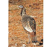 Wild Turkey Photographic Print