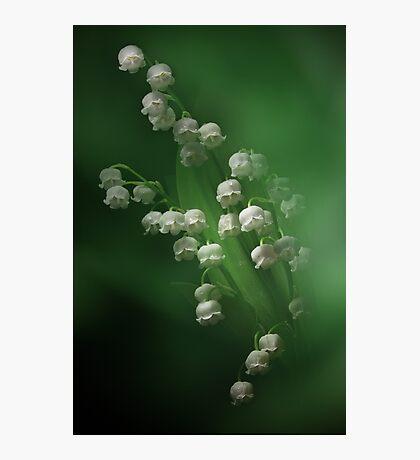 Little Bells Photographic Print
