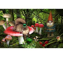 magical gnome cats in the forest Photographic Print