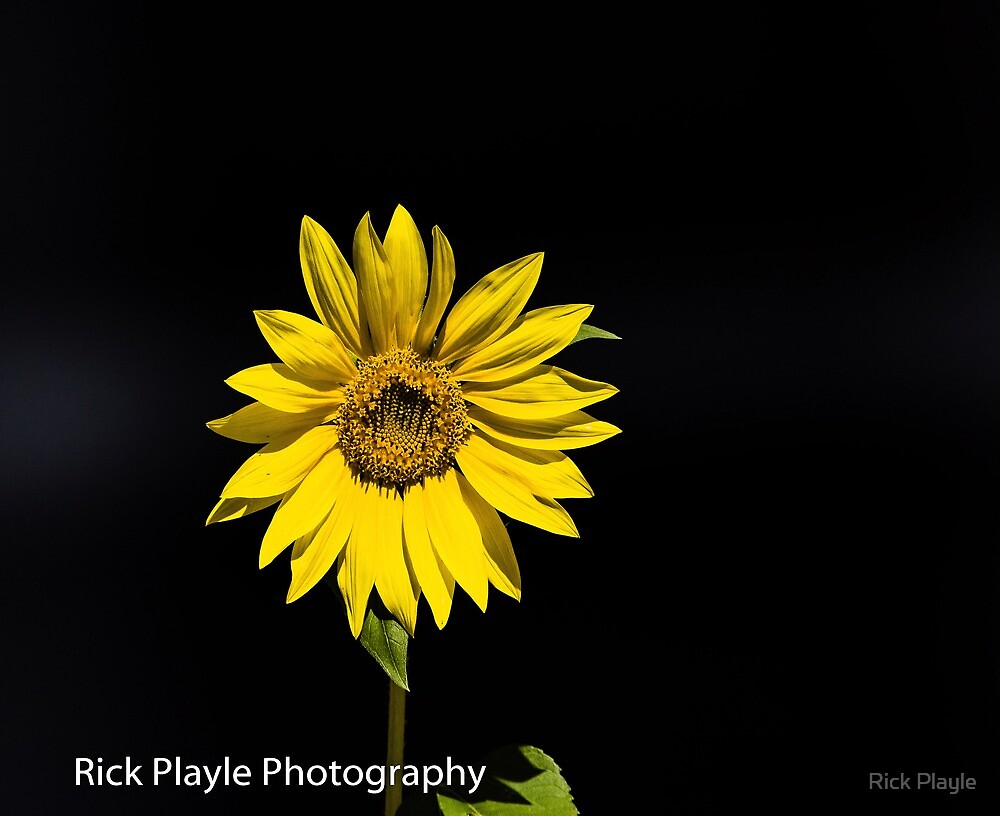 Stand and Shine by Rick Playle