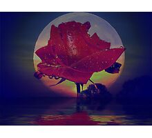 THE MOON, THE ROSE AND THE BUSH Photographic Print