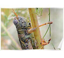 Dewey Grasshopper Poster