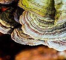 fungi canopy by Thomas Eggert